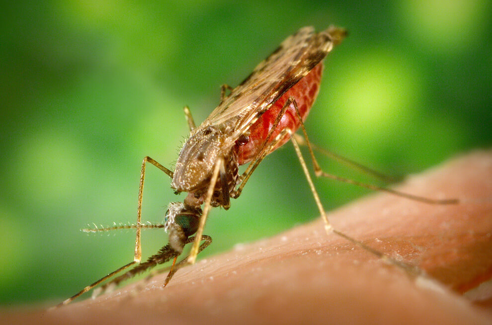 лечения болезней с помощью насекомых