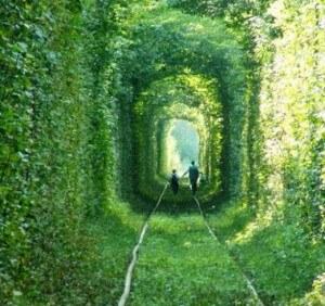 зеленый коридор 2