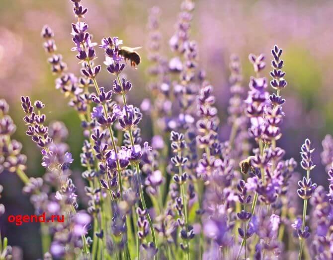 запахи и здоровье