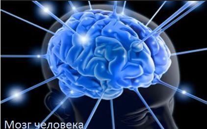 Как происходит обработка речи мозгом