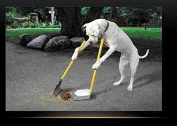 помет животных, мусор
