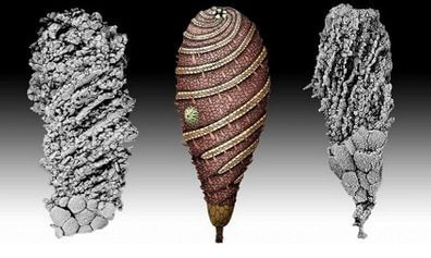 Ископаемое существо в форме сигары, которое обитало на Земле 520 млн лет