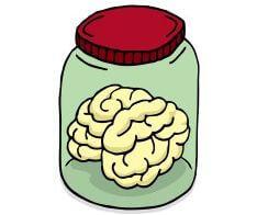 искусственный мозг в пробирке