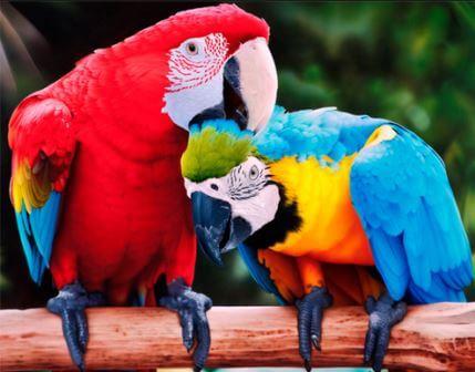 попугаю дают людям имена