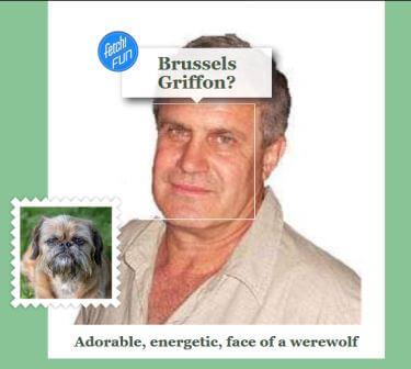 брюссельский грифон