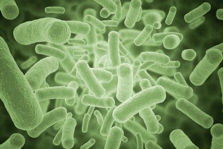 бактерии и антибиотики