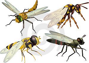 летающие насекомые