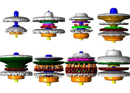 двигатели для бактерий