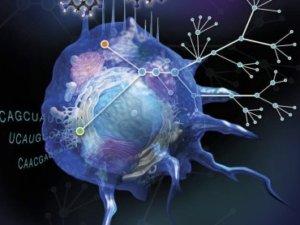 макрофаги- иммунитет
