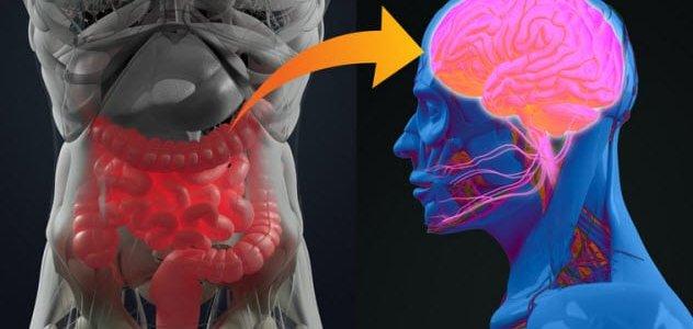 мозг-бактерии