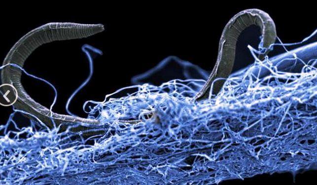 живые организмы