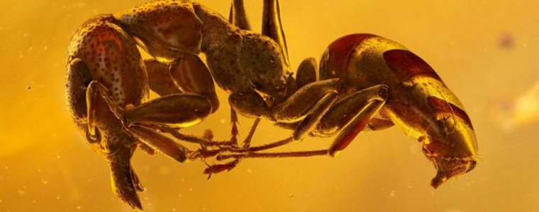 Потрясающие фото насекомых, живших 45 миллионов лет назад