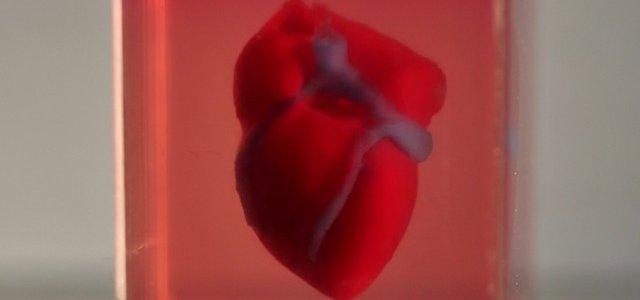 Израильские ученые впервые в мире напечатали живое сердце