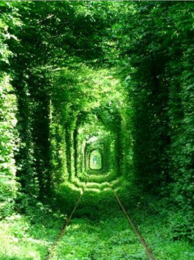 уникальный зеленый коридор