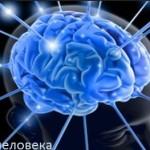 Мозг человека может быть биологическим квантовым компьютером?