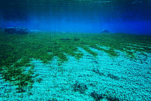 Самое чистое и прозрачное озеро в мире 5