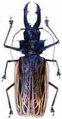 Дровосек-титан (Titanus giganteus) - самый большой жук в мире