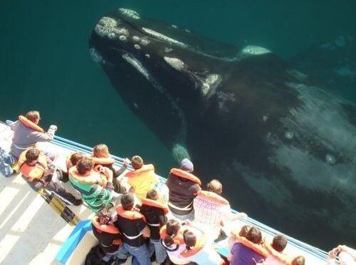 Одинокий кит с необычным голосом в 52 герца
