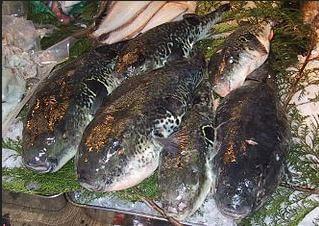 иглобрюхие рыбы