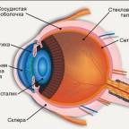 Особенности человеческого глаза: интересные факты