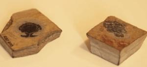 окаменелости древних рыб
