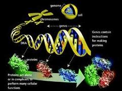 геномы смертельных вирусов