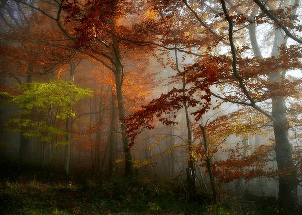 Flickr - здесь много интересных фотографий!