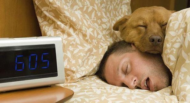 Ночной сон всеже важнее дневного