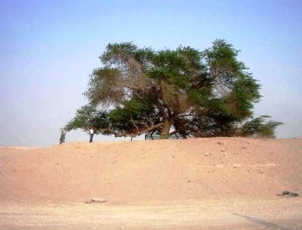 """Дерево """"Хаджарат аль Хая"""""""