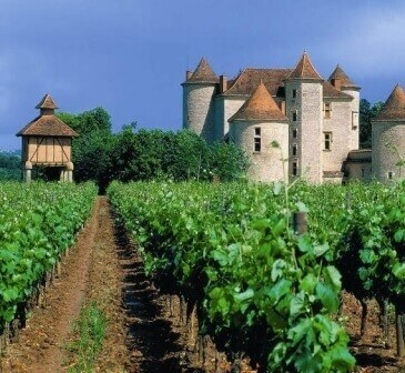франция- виноградники