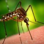Почему нельзя уничтожить комаров полностью