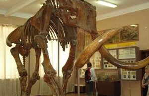 возродить популяцию вымерших в глубокой древности мамонтов