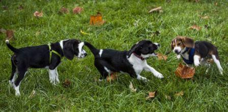 Первые в мире щенки из пробирки