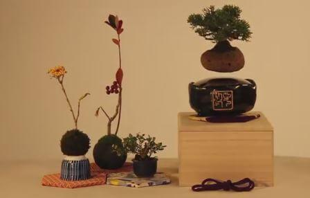 Парящие горшочки с растениями