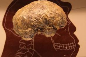 череп прачеловека