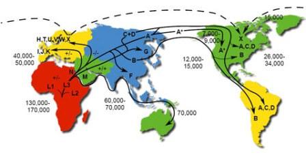 древние люди расселились по континентам в результате единственной миграции