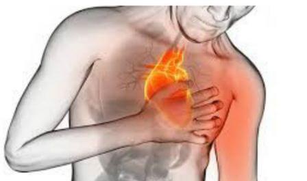 Ученые нашли новый вид клеток, который помогает исцелить сердце