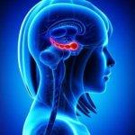 Ученые: Центр памяти мозга у пожилых перестаёт следить за глазами