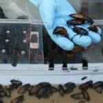 Зачем в Китае выращивают тараканов в огромных количествах