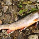 Российские ученые выяснили какая рыба самая полезная
