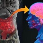 Некоторые неожиданные открытия, связанные с деятельностью бактерий