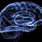 Как времена года влияют на работу мозга