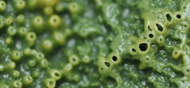 Ученые из Гарварда делают «веху» в синтезе антираковых молекул, обнаруженных в морских губках