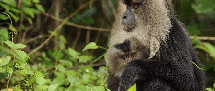 Почему количество животных, обитающих в тропических лесах, сократилось вдвое