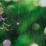 "Почему бактерии не ""едят"" паутину"