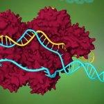 Новая технология CRISPR предлагает непревзойденный контроль эпигенетического наследования