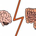 Иммунные клетки для мозга образуются в кишечнике