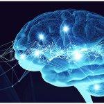 Семь фактов о человеческом мозге, о которых вы, возможно, не знали