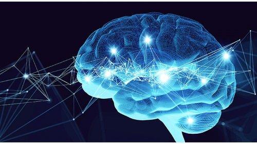 мозг человека