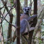 Массовое вымирание видов животных ускоряется с беспрецедентной скоростью